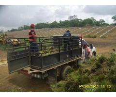 barreras vivas bolsacreto bioingenieria vetiver colombia