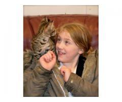 Savannah Kittens para Adopción