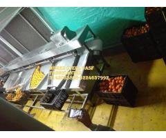 Lavadora de frutas,planta de frutas,despulpadora cepilladoras banda transportadora de alimentos