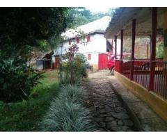 UNA GANGA SE VENDE FINCA PRODUCTIVA  Municipio: Andes, Antioquia Colombia