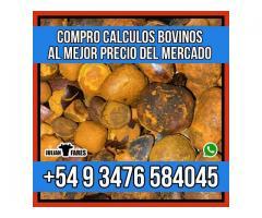 Compro Calculos Biliares Bovinos - Julian Fares