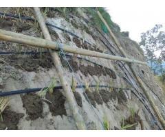 PASTO VETIVER, para Control de Erosión y Estabilización de Taludes