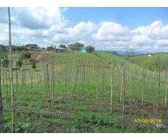Finca de 13 cuadras en Altagracia en pasto con casa. $450.000.000