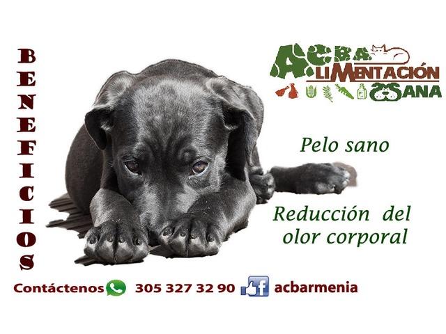 Dieta cruda para mascotas - 4/4