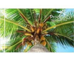 Extracto de coco para tu salud